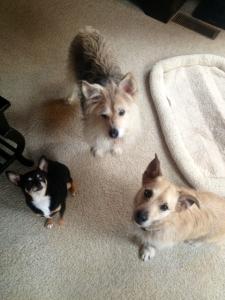 mongillio dogs
